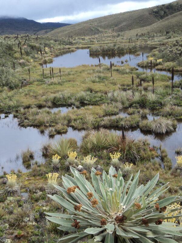 Río Bogotá Páramo Guacheneque