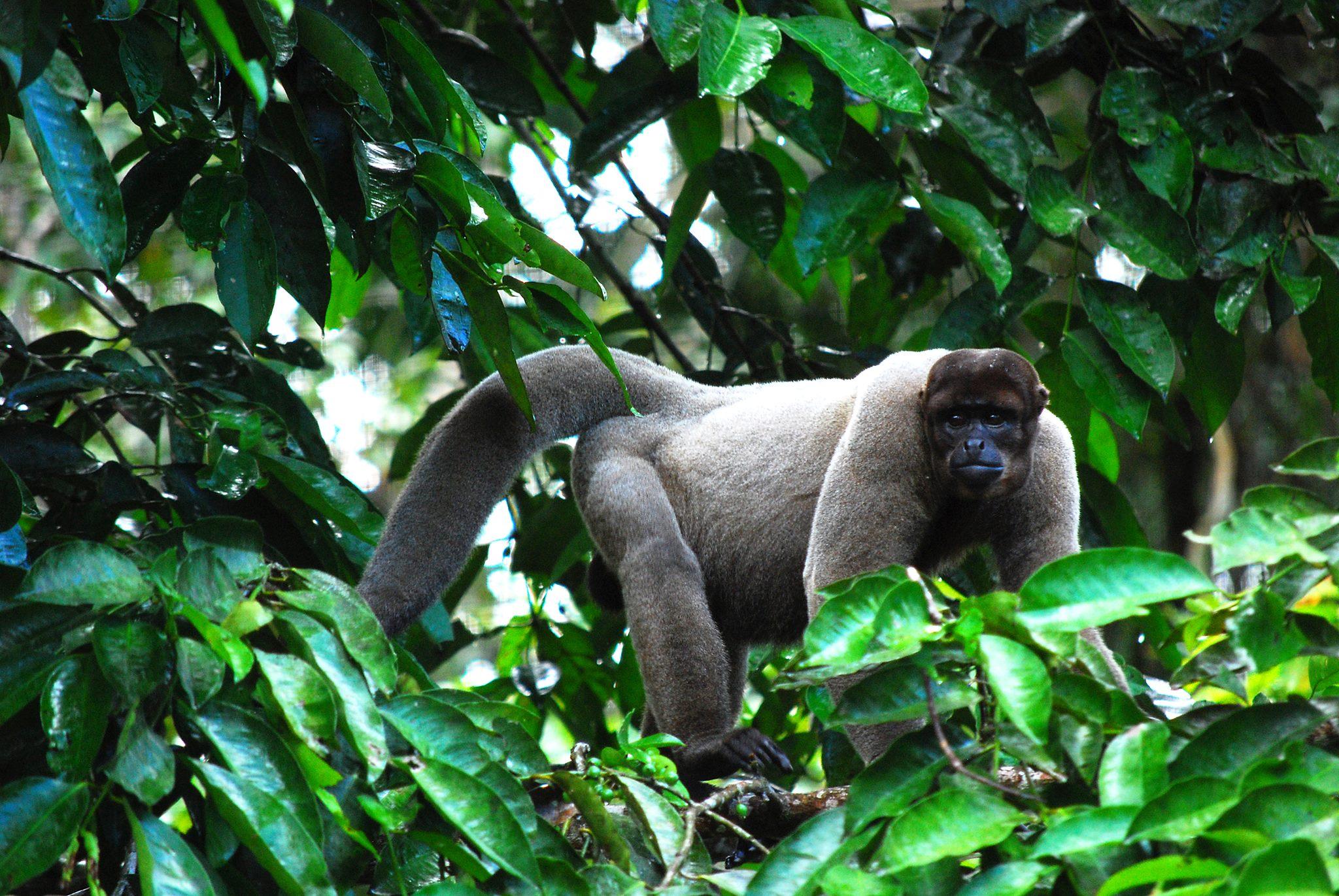 Amazonas 3 días